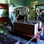 Bogor Zoology Museum 150x150