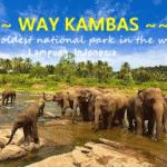 Way Kambas 2 150x150