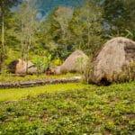 Wamena Biology Garden 150x150