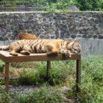 Bandung Zoo 1 150x150