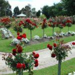 Cibodas Botanical Garden2 150x150