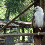 Jurug Zoo2 150x150