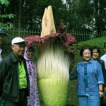Kebun Raya Megawati Soekarnoputri Botanical Garden2 150x150