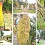 Lemor Botanical Garden 150x150