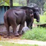 Medan Zoo2 150x150