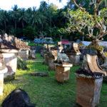 Minahasa Botanical Garden 150x150