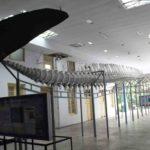 Museum Siwalima Provinsi Maluku2 150x150