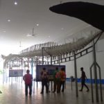 Museum Zoologis 150x150