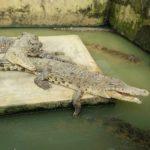 Park of Acid Beetle Crocodile 150x150