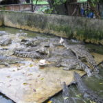Park of Acid Beetle Crocodile2 150x150