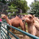 Pematang Siantar Zoo2 150x150