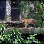 Ragunan Zoo2 150x150