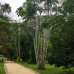 Sambas Botanical garden 150x150