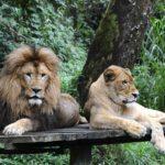 Taman Safari Bogor 150x150