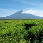 Tropical Rainforest Heritage of Sumatra2 150x150