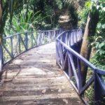 Universitas Halu Oleo Botanical Garden 150x150
