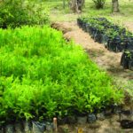 Wamena Biology Garden2 150x150