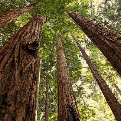 RedwoodNationalPark 8a3c3aed2ca74e65a5ba9364f2554d10 400x400